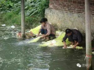%渔耕田鱼菜共生